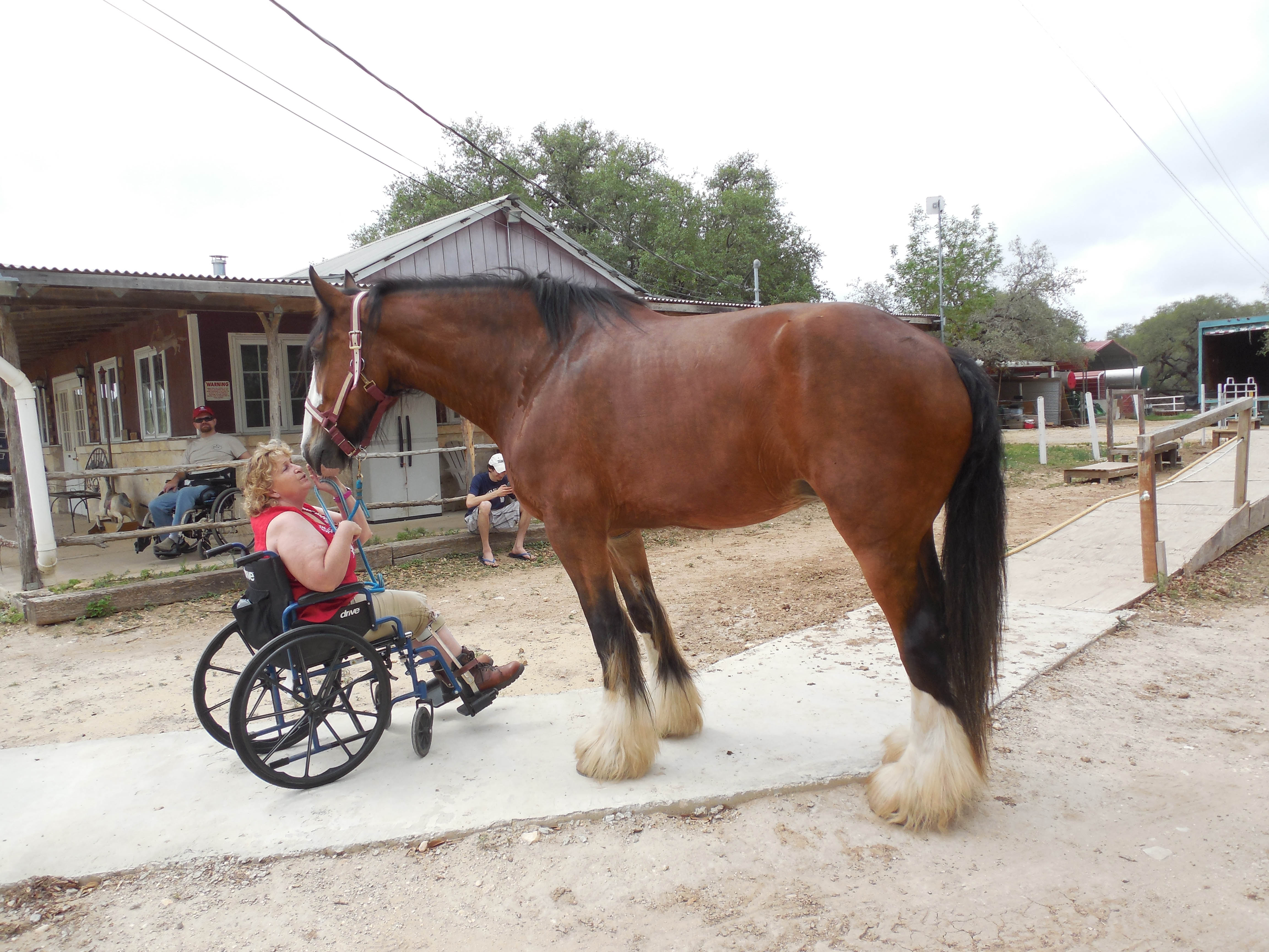 Horses Helping the Handicapped Inc.